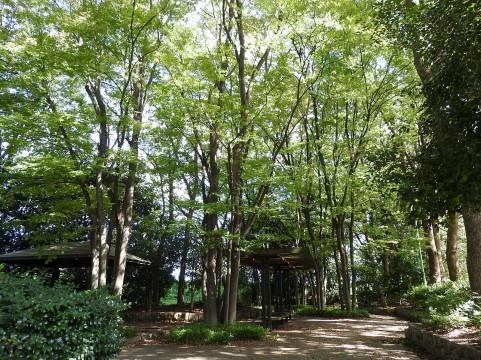 森林の遊歩道