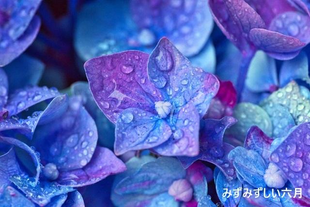 水に流す紫陽花の季節の財布はコレ